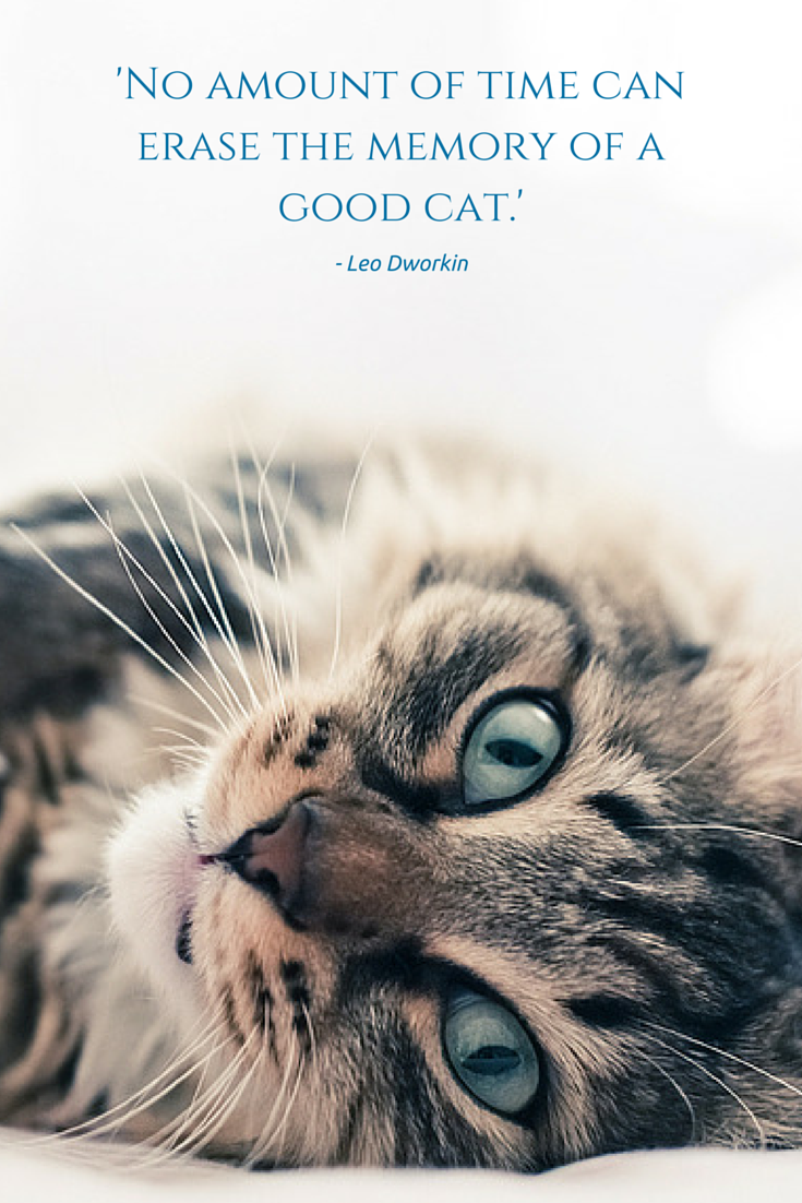 'No amount of time can erase the memory of a good cat