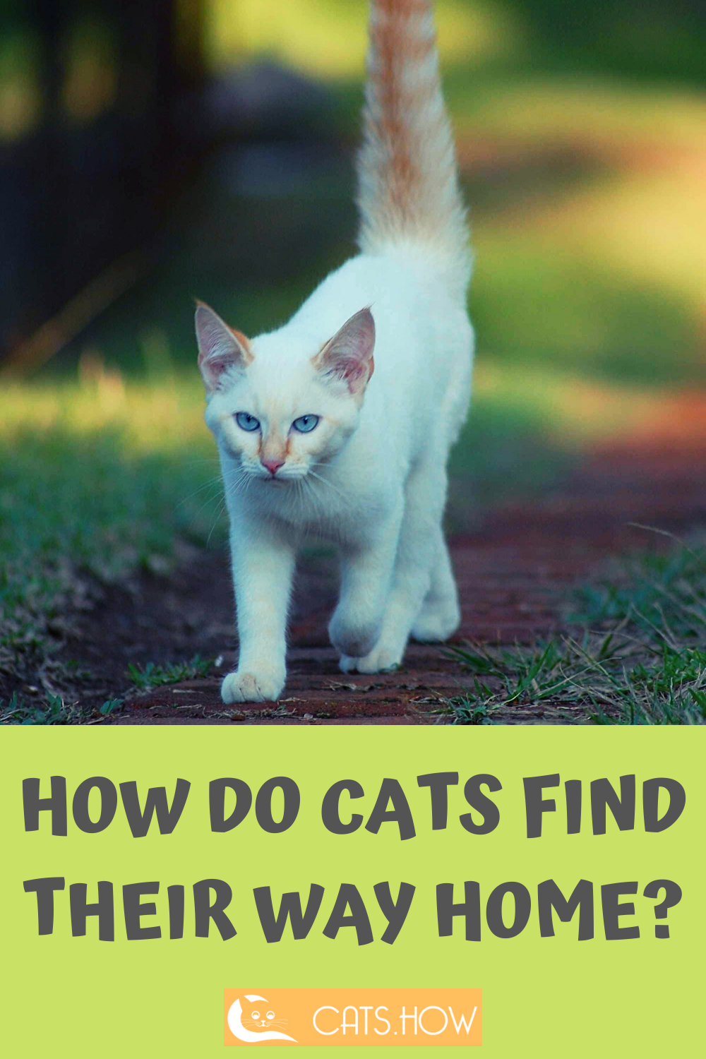 How Do Cats Find Their Way Home Cats Cat Facts Kitten Cartoon