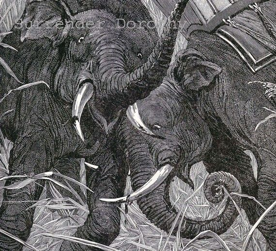 Elephant's Deadly Jungle Fight 1890 Victorian by SurrenderDorothy (Art & Collectibles, Prints, Etchings & Engravings, elephant, natural history, victorian 1890s art, illustration nature, animal battle, male bull habitat, black white print, Africa India, surrender dorothy, paper ephemera, zoo zoology, storybook naturalist, territory jungle)
