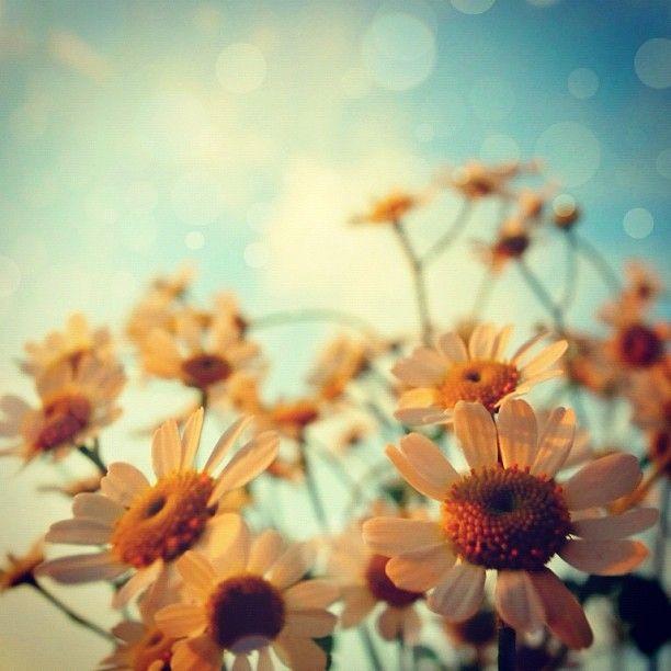sunset - @moonlightice | Webstagram #flowers #spring