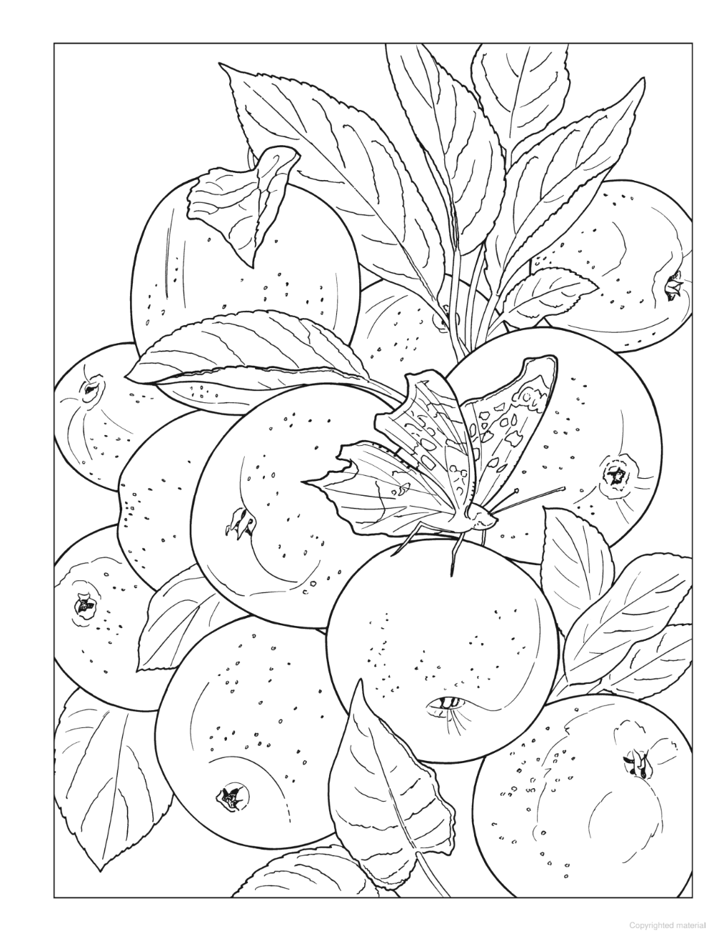 Creative Haven Beautiful Nature Designs Coloring Book Designs Coloring Books Nature Design Beautiful Nature