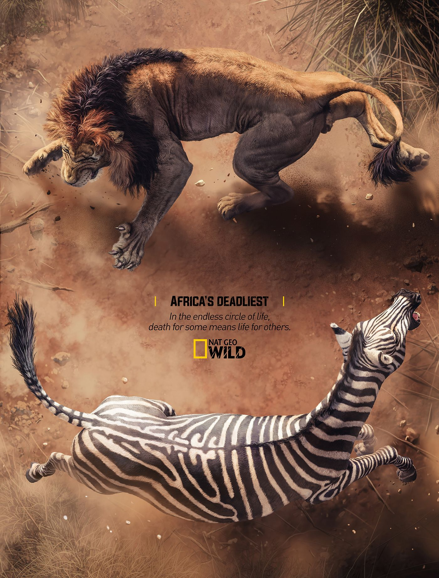 Nat Geo Wild - Circle Of Life on Behance | MIsc in 2019