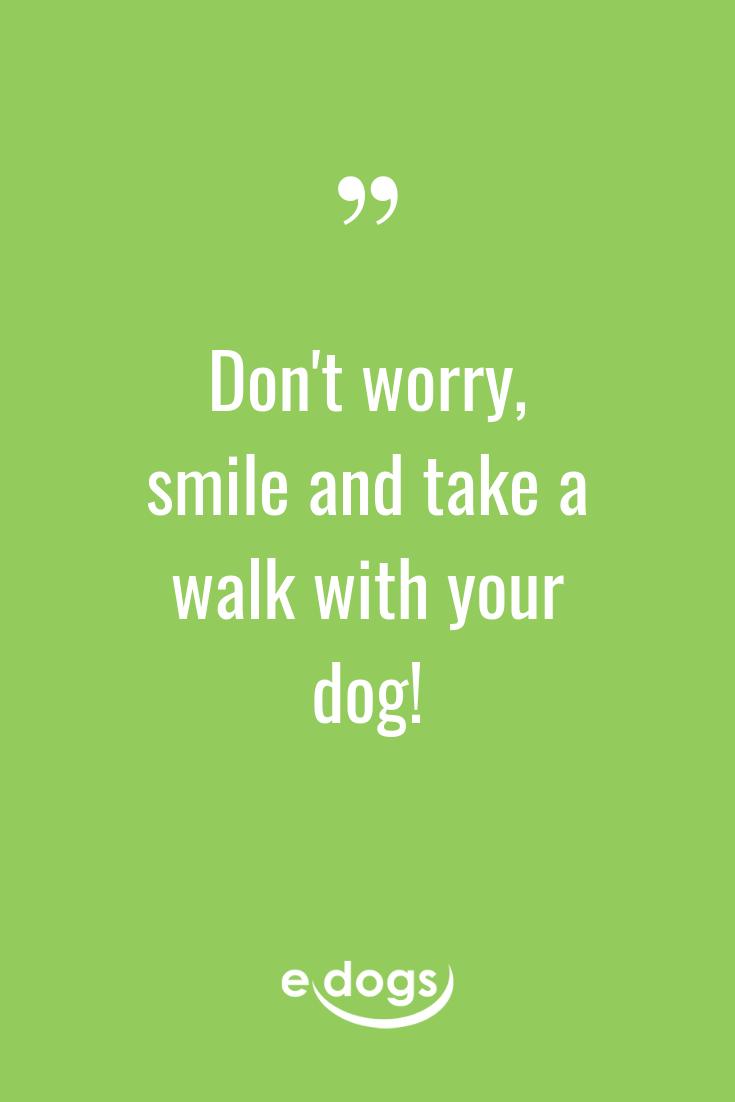 Lustige Hundesprüche, inspirierende Zitate, DIY und mehr rund um den Hund findest du bei edogs.de! - Spruch des Tages - Hundemensch - Hundeliebe