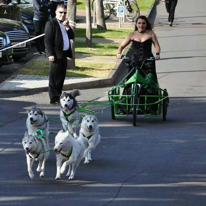 On the way to prom. - Funny Dog Quotes #funnydogquotes #funnydog #dog -  On the way to prom.  Funny Husky Meme  Funny Husky Quote #husky #funny #funnyhusky  On the way to prom. Funny Dog Quotes #funnydogquotes  The post On the way to prom. appeared first on Gag Dad.