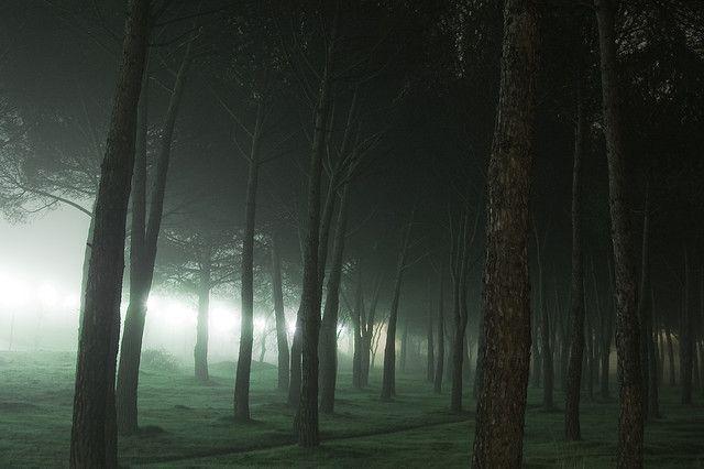 pinos con niebla by Pelayo Maojo, via Flickr