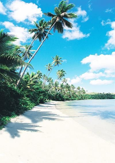 Beach Travel Backdrop Palm For Wedding Photography Beautydiytips
