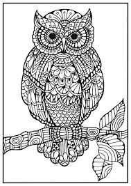 Bildergebnis Für Zentangle Muster Eule Colouring Pages