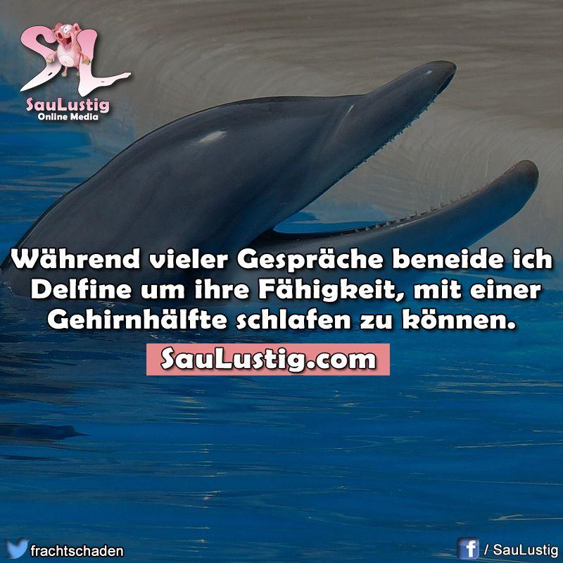 Delfine können das! | Annas Witze + lustige Sprüche