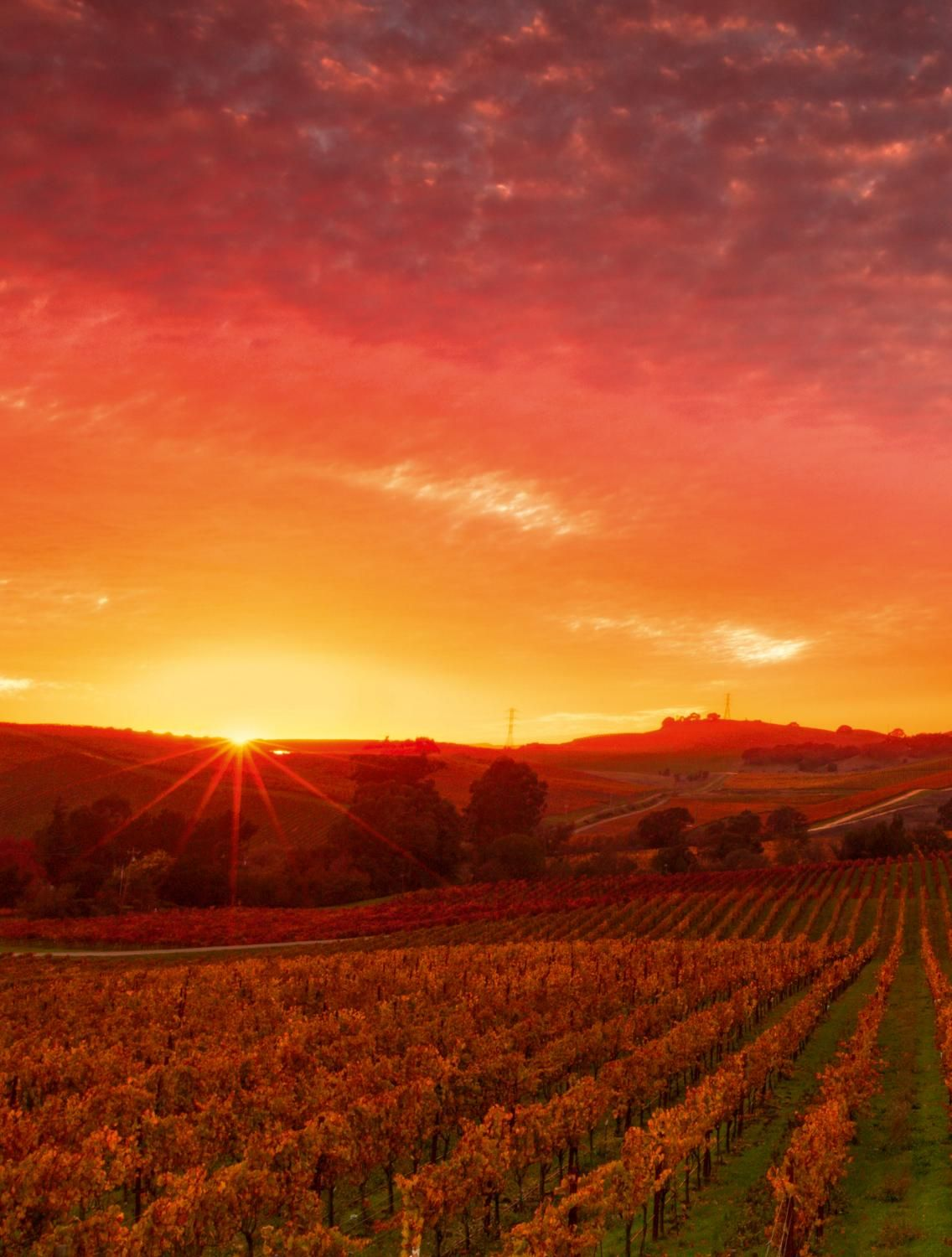 Pin By Jennifer Bowman On Travel United States Places Wine Country Napa Valley
