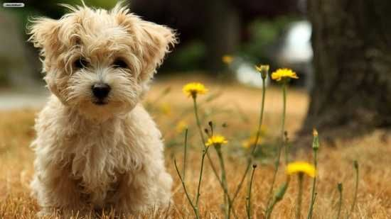 Cute Dog Breeds Small Medium 550 X 309 17 Kb Hunderassen Hunde