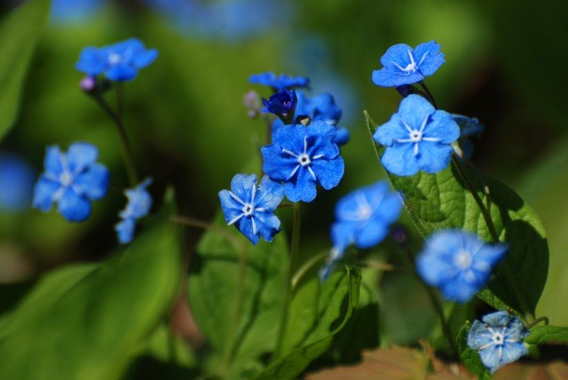 Uludka Wiosenna Flowers Plants