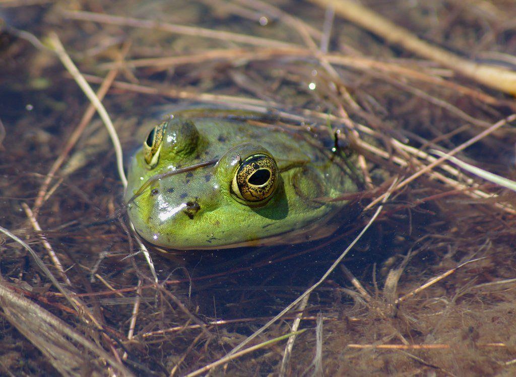 I Love Cute Froggies Frog Bathroom Frog Decor Cute Bath Mats