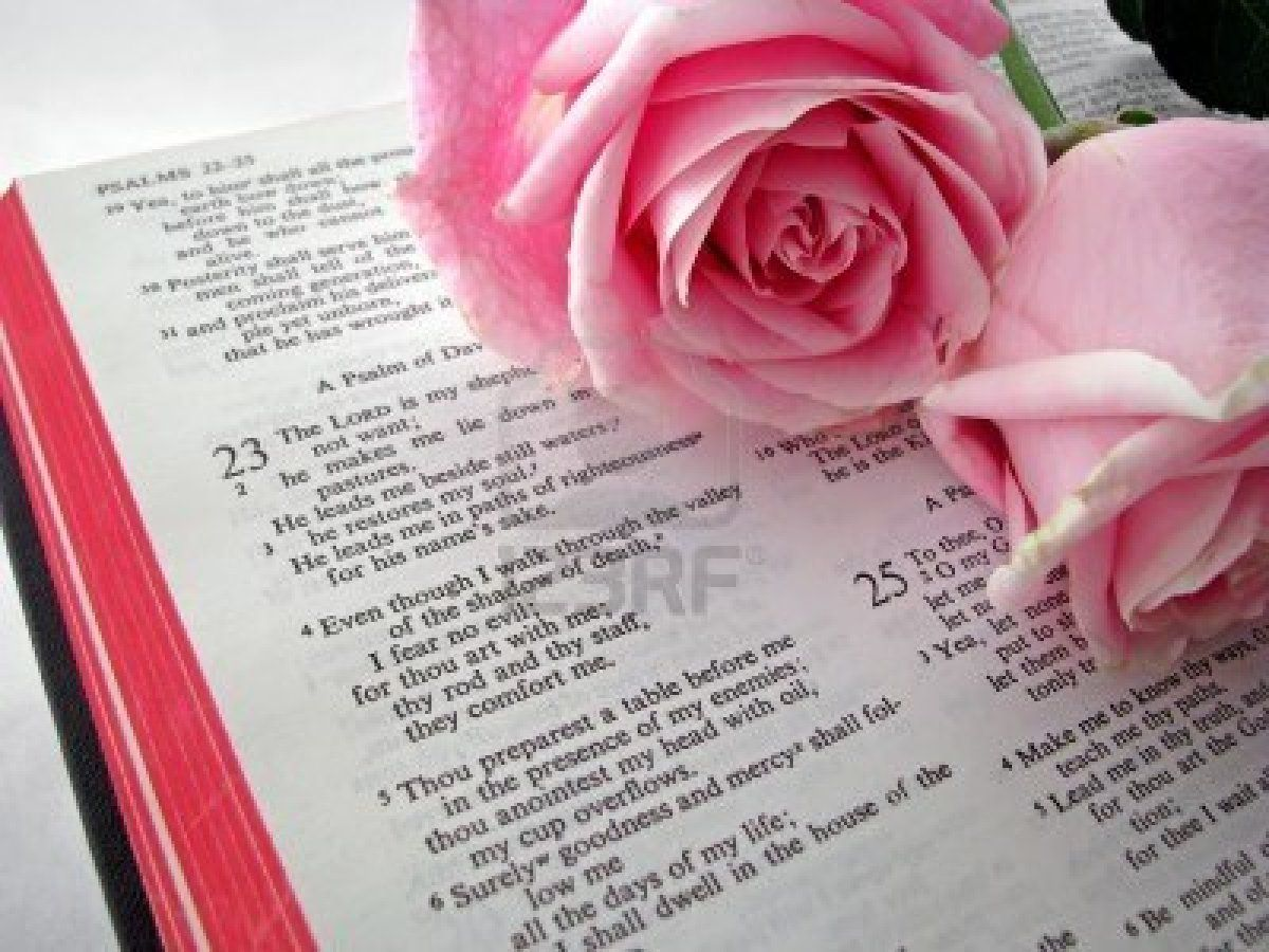 Pink Rose And Bible   www.topsimages.com