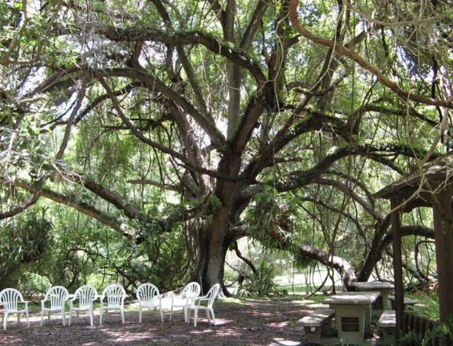 Wedding Venues Valdosta Ga Kanapaha Botanical Gardens
