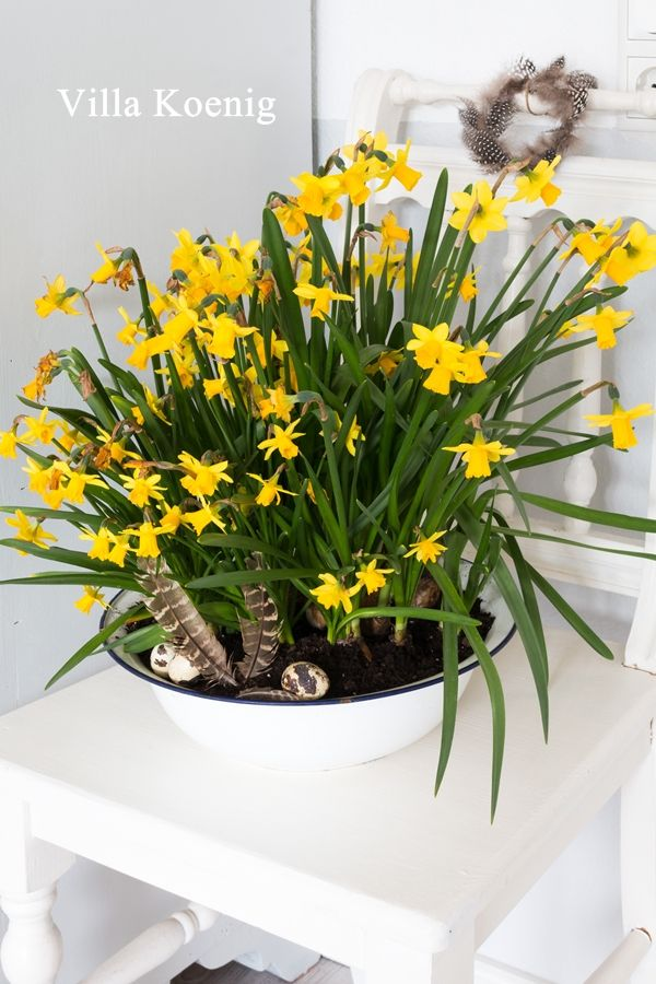 Im Frühlingsmodus | Villa König | Frühling, Frühjahr