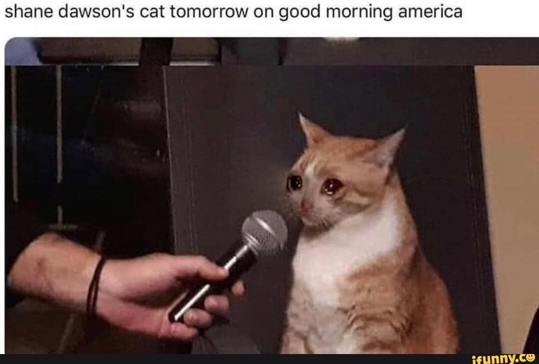 Shane Dawson S Cat Tomorrow On Good Morning America Ifunny Cat Memes Cats Funniest Cat Memes