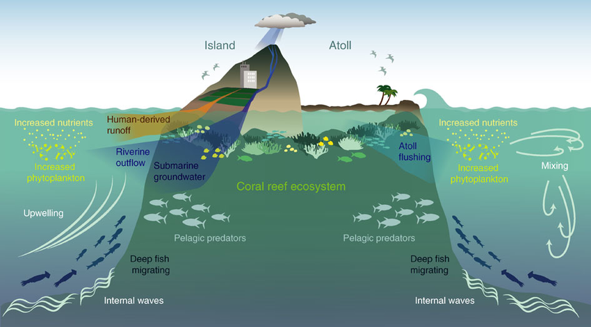 The Island Mass Effect Localized Increases In Phytoplankton Biomass Download Scientific Diagram Coral Reef Ecosystem Climate Change Effects Ocean