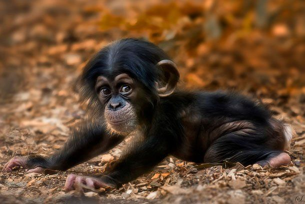 Baby Animals Like You Have NEVER Seen Them Before! | News Mogul