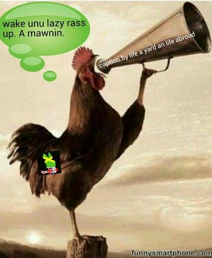 How Tough Are You Really Rooster Good Morning Animals