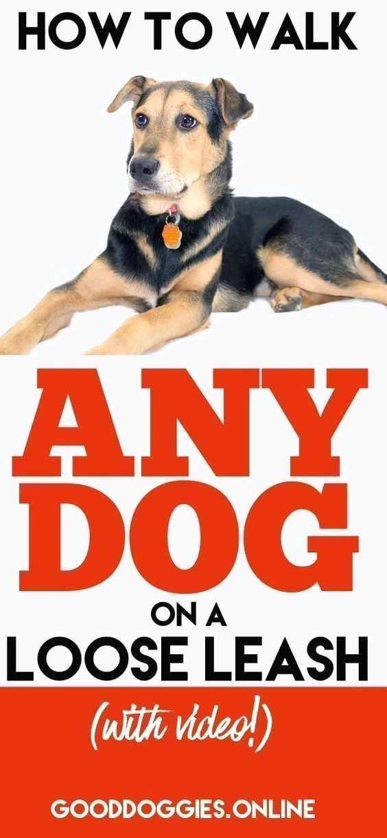 Dog Obedience Training Click The Image For Var Click The