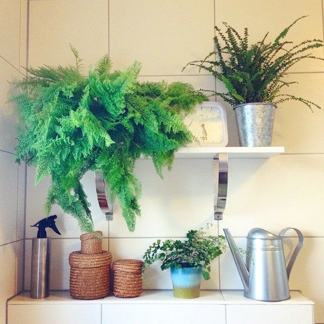 Geen wall in our tiny bathroom bookworm for botanicals take the step to creating a better garden by hiring expert landscape gardeners in kent who can turn your outdoor space into something you can be proud of workwithnaturefo