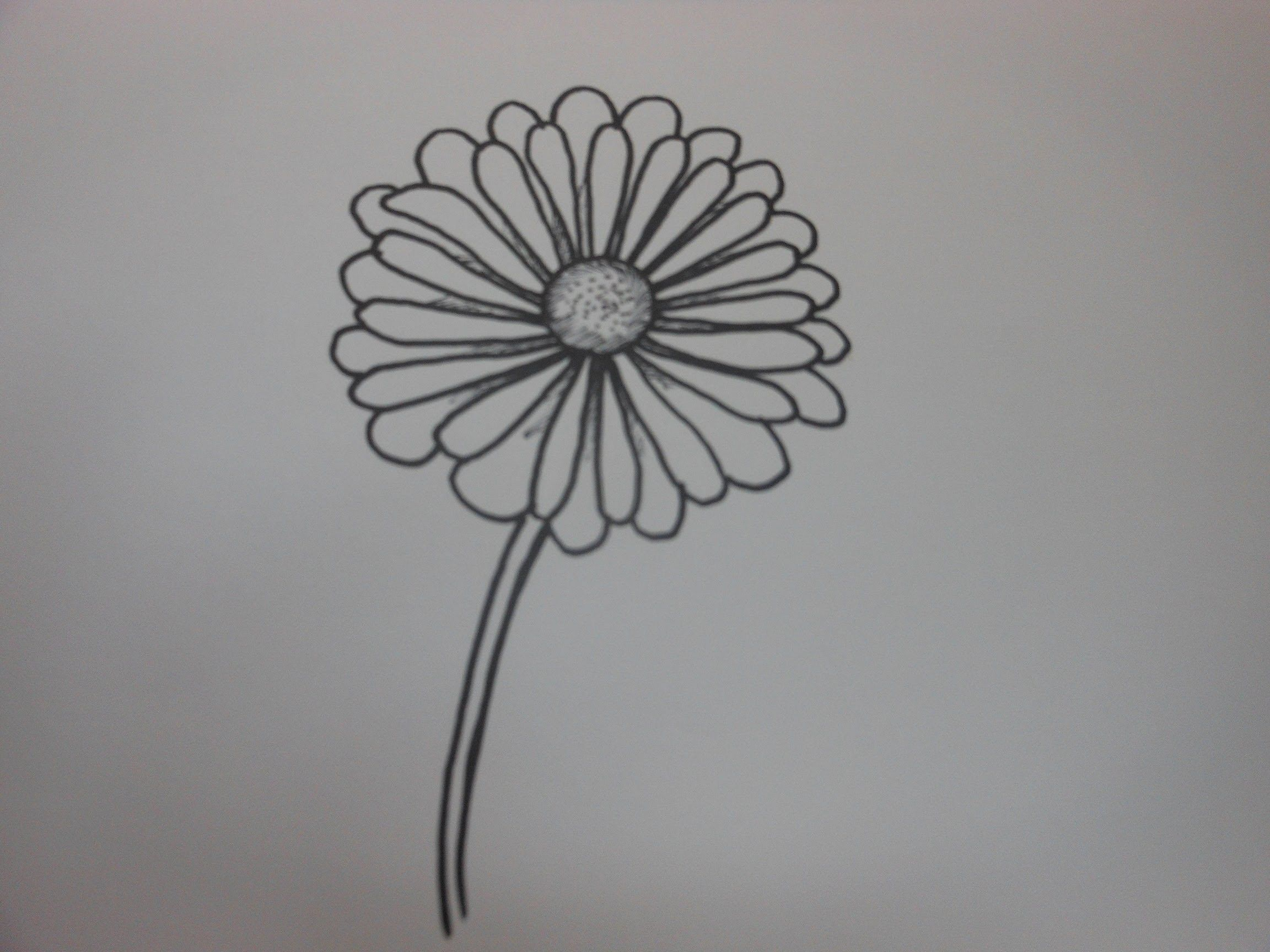 Black Line Flower Drawing : Black and white roses flowers elegance eps