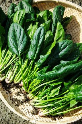 8 Easiest Vegetables to Grow (Even If Don't Know G