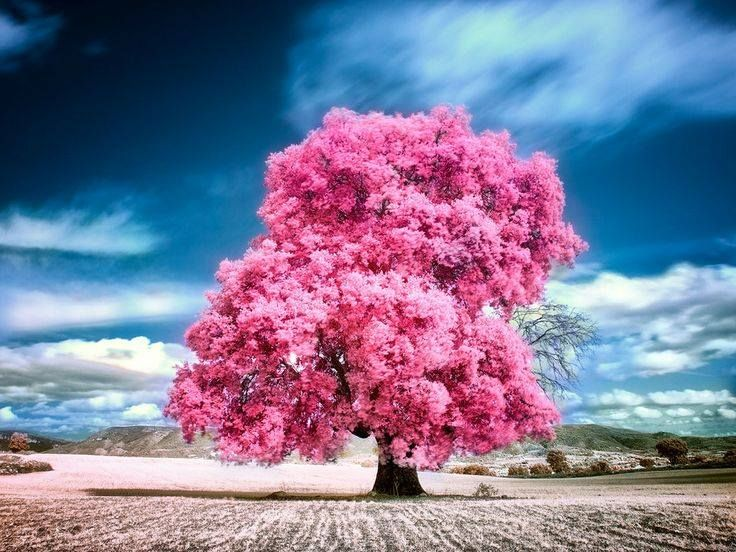 cotton candy Pink nature, Beautiful nature pictures