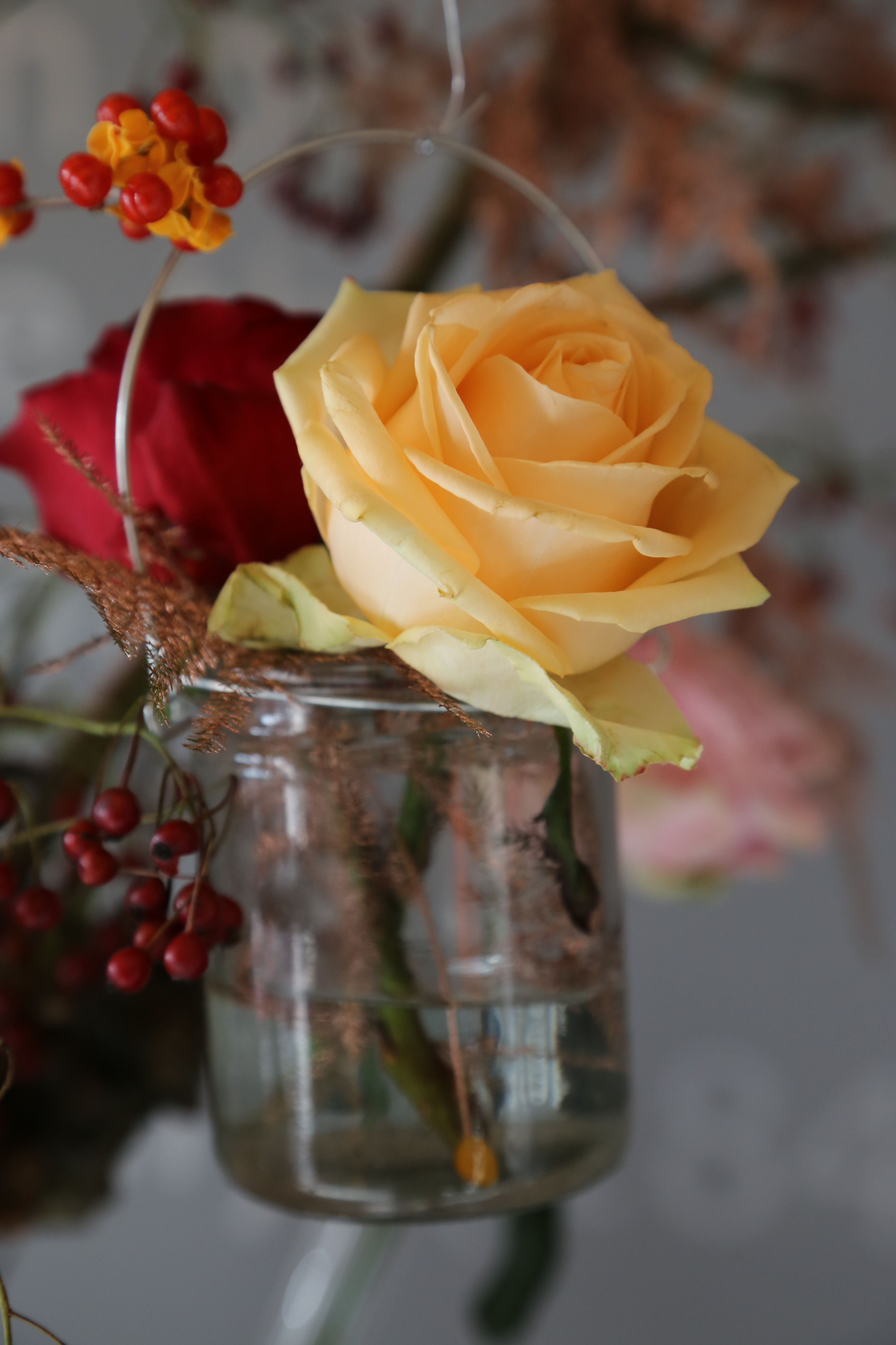 Meet Peach Avalanche+®, just hanging around with a red colleague rose, also by hybridizer Dümmen Orange. We adore this jam jar trend, it's a casual and simply stunning way to create seasonal home décor with hardly any fuss. Show us yours, we'd love to share!   www.avalancheroses.com