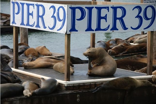 Pier 39 - San Francisco!....one of the funniest and stinkiest places ever lol we loved it!