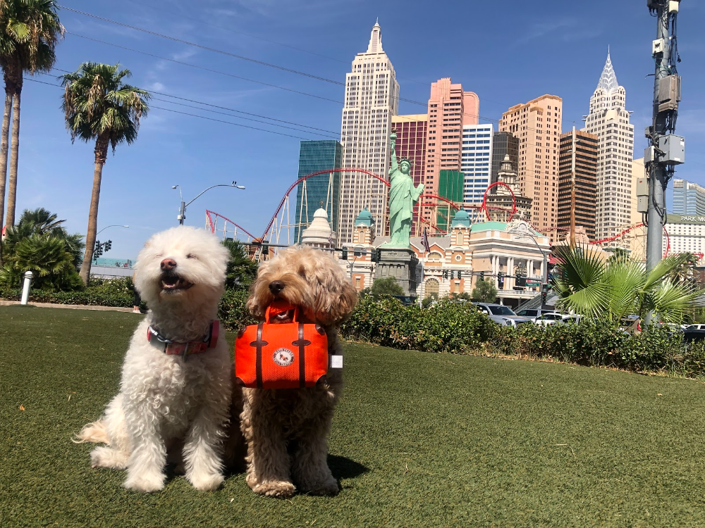 Our Favorite Pet Products From Superzoo 2019 In 2020 Pets Pet Sitters Pet Parent