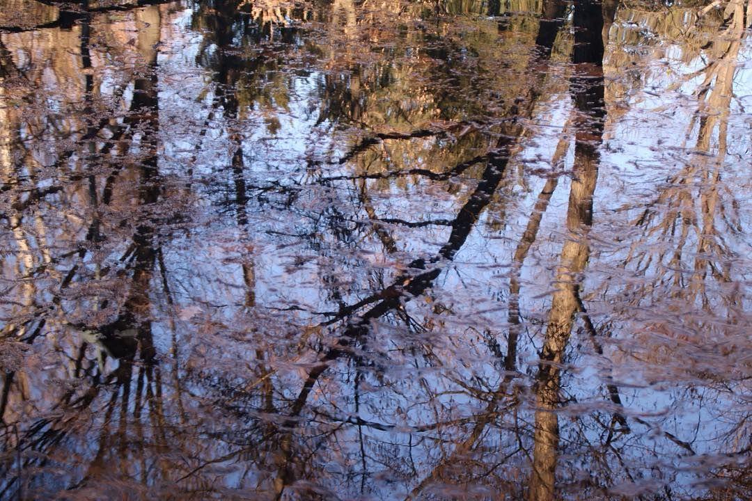 #milan#milanocity#aroundmilan #aroundmi#portavenezia#park#winter #giardiniidromontanelli#water#lake #reflection#likeapainting#autumncolors  #lovelyday#sunnydayinmilan#happiness #photooftheday#photography#myself #milanodavedere#milanodaclick#ig_milano #vsco#vscocam#vscogood#vscoeffect by elisabettv