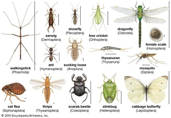 Insect Definition Facts Classification Insects Names Insects Are Insects Animals