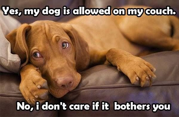 Do you let your Dog/s on the couch?