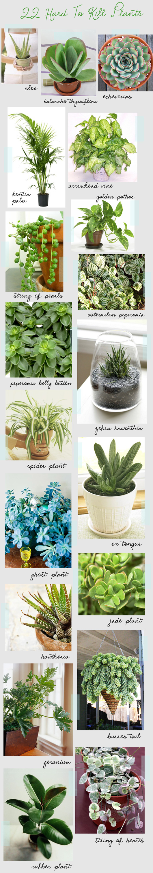 These plants are all hard to kill (important info for people who do NOT have green thumbs!)