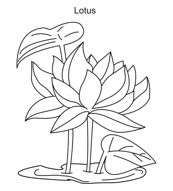 lotus flower coloring pages - photo#23