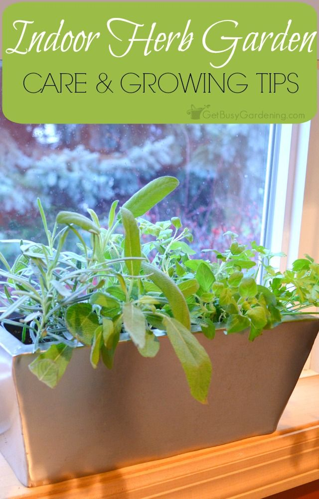 Indoor Herb Garden Growing Tips | Get Busy Gardening! - Featured at the Home Matters Linky Party 124