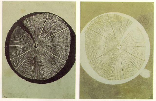 William Henry Fox Talbot, Transverse Section Stem, Solar Photo-Micrograph, 1839