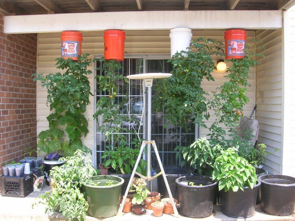 Upside Down Tomato Planters Junk Ar15 Com Archive Gardening Ideas Pinterest Container