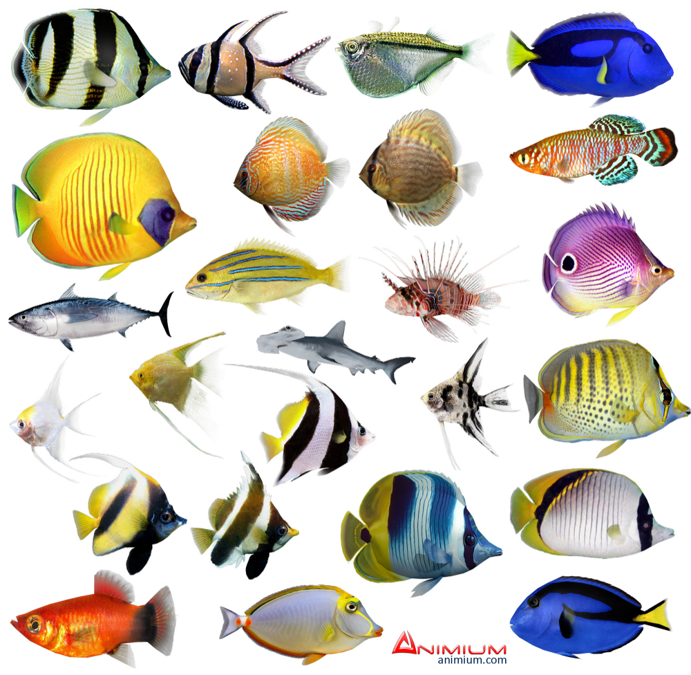 fish 3d model Google Search Abstract artwork, 3d model