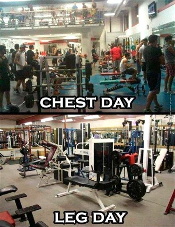Chest Day VS Leg Day