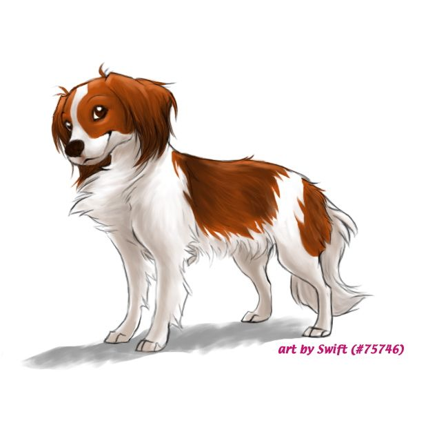 Fp Comm 5 Kooikerhondje By Shelzie On Deviantart Dog Angel Cute Dogs Dog Art