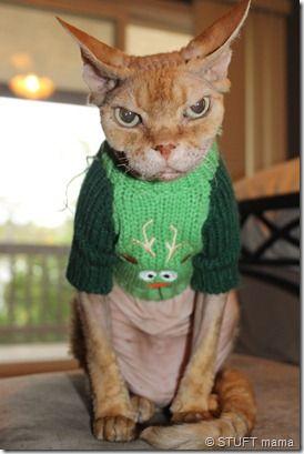 Kersttrui Poes.Ik Haat Mijn Kerst Trui Poes Katten Grappige Dierenfoto S At
