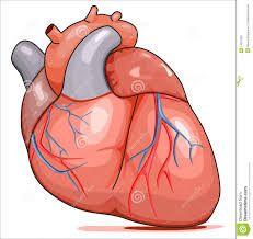 Wonderbaar Afbeeldingsresultaat voor tekening menselijk hart | Menselijk hart NT-73