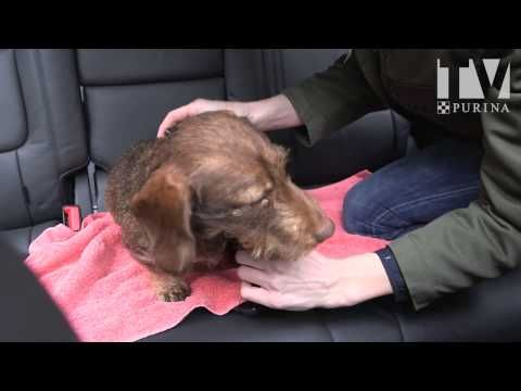 faire du sport avec son chien youtube chiens vid o sur le chien chien chat et dressage. Black Bedroom Furniture Sets. Home Design Ideas
