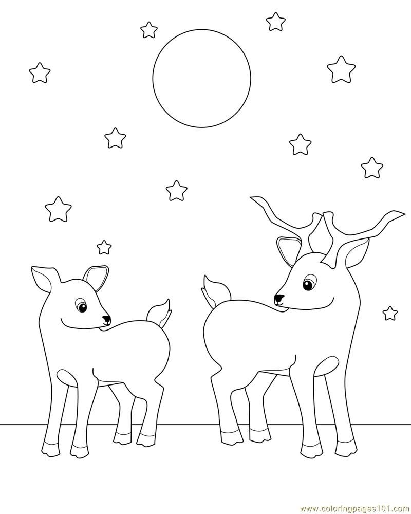 deer coloring pages for adults go back images for baby deer