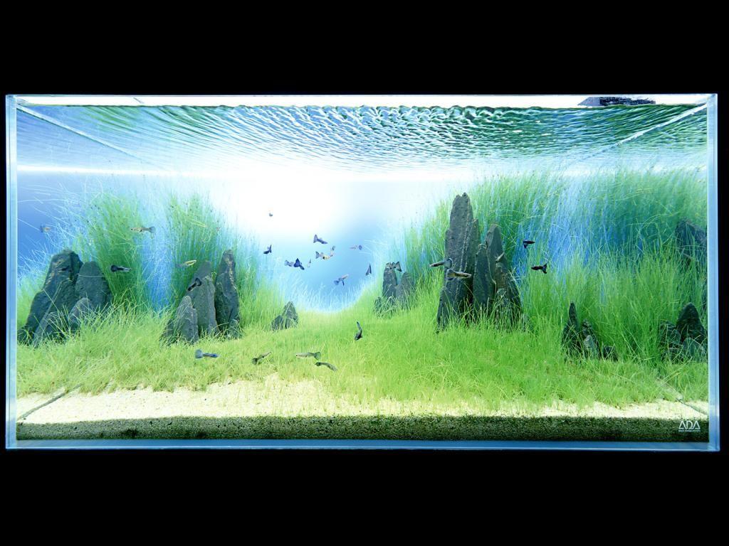 Takashi amano aquarium 39 pinterest guppy aquariums for Landscaping rocks for aquarium