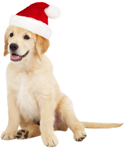 Cute Dog with Santa Hat PNG Clipart Cute dogs, Dog top