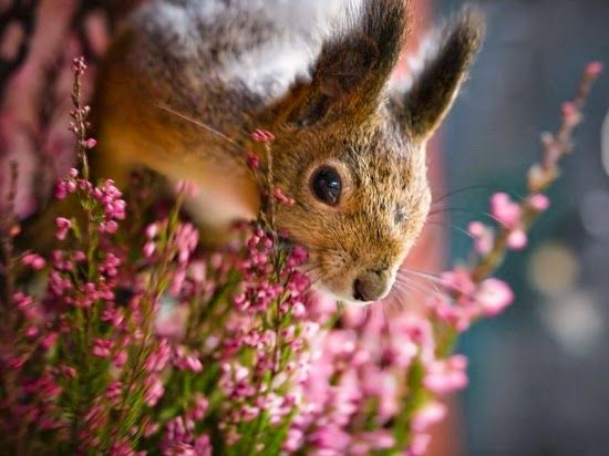 Squirel and Flowers
