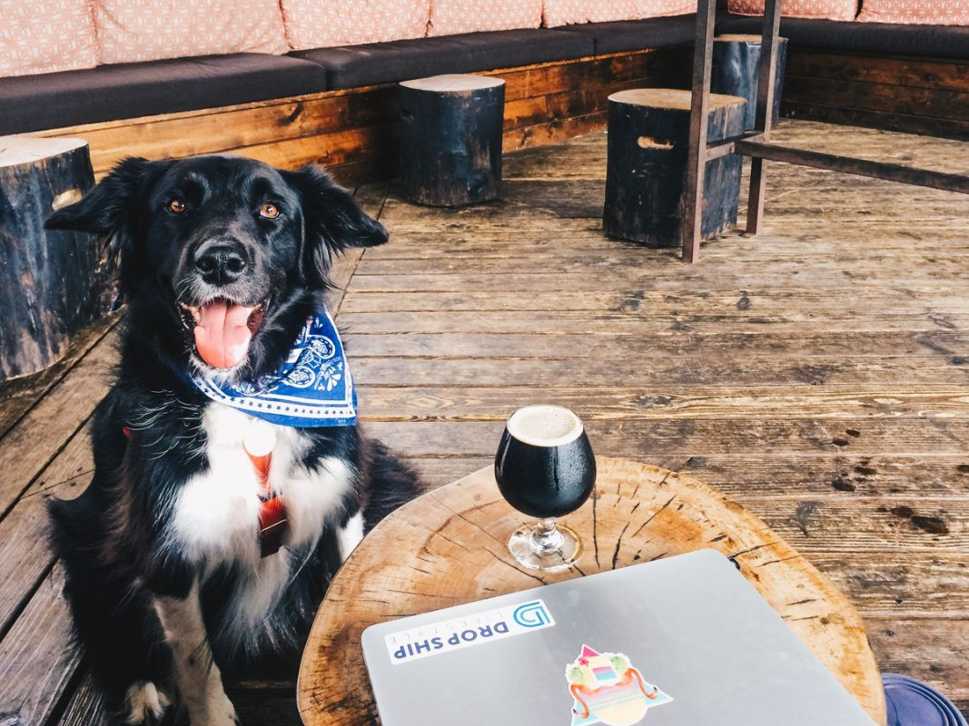 35 Dog Friendly Bars And Restaurants In Austin Texas Dog Friends Things To Do In Austin Tx Dog Restaurant